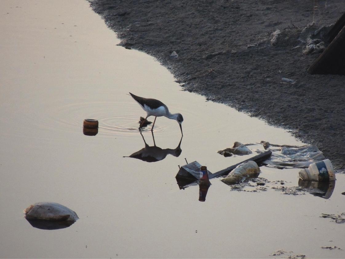 Siamo in un mare di… plastica