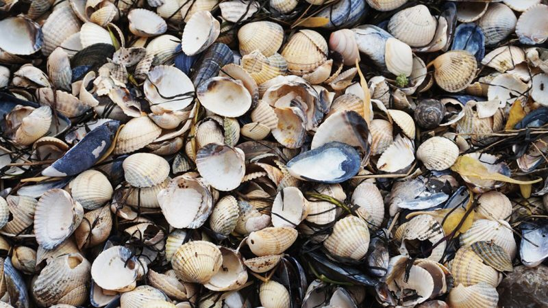La nuova vita delle cozze e delle vongole: i tesori del mare