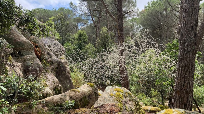 Organica – Museo di arte ambientale nel Parco del Limbara, tra i graniti e le piscine naturali della foresta di Curadureddu. Intervista alla curatrice Giannella Demuro